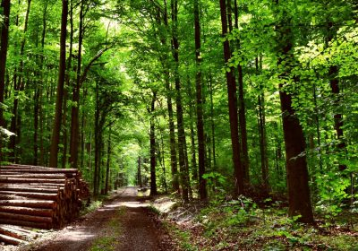 Forests For Health